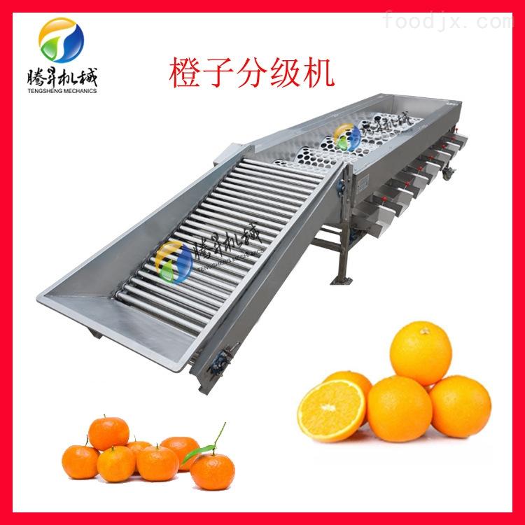 滚桶选果机 橙子柑橘百香果分级机