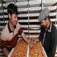 热泵杏子烘干机厂家