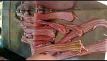 不锈钢自动猪食管剖开机器