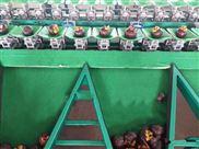 泰国山竹都在用的重量分选机 选果必备