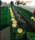 哪个厂家的甜瓜分选机质量好,价格合理?