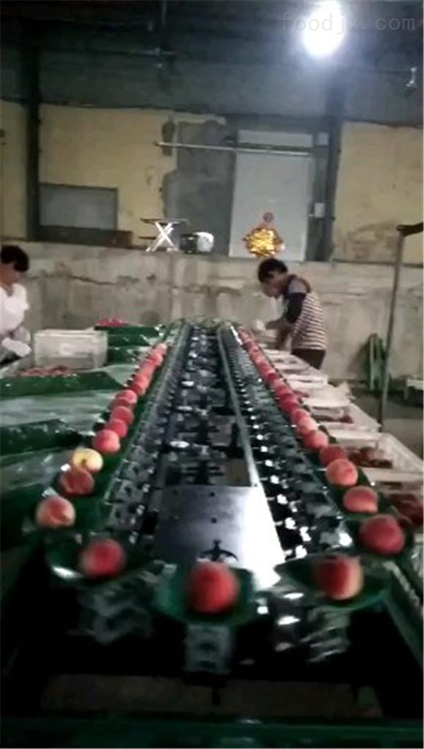 莱阳蟠桃选果机 不伤果的分选机 桃子专用