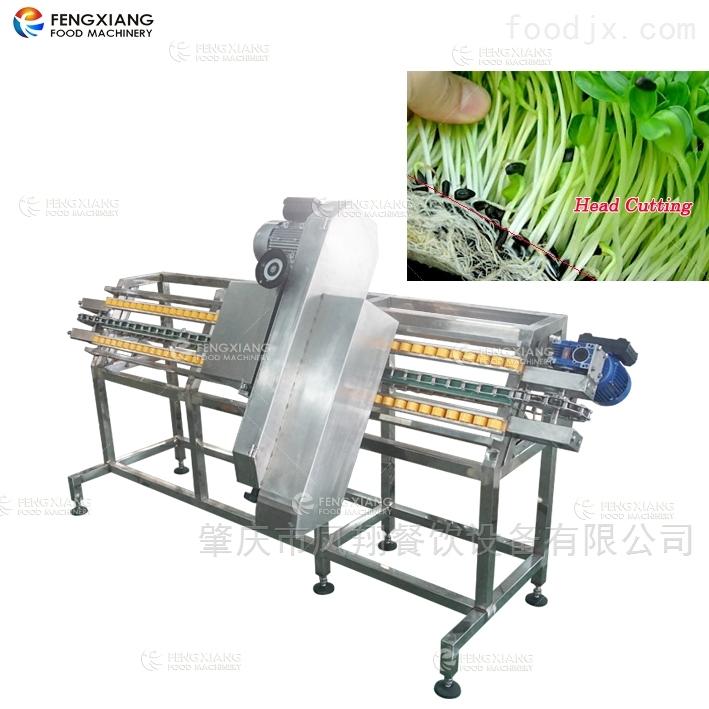 豆芽切头机托盘式带锯切菜机芽苗切根机