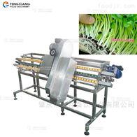 DY-I豆芽切头机托盘式带锯切菜机芽苗切根机