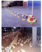 肉鸡蛋鸡自动饮水系统