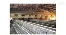 养鸡设备四列喂料机器