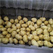 土豆去皮清洗机厂家批发