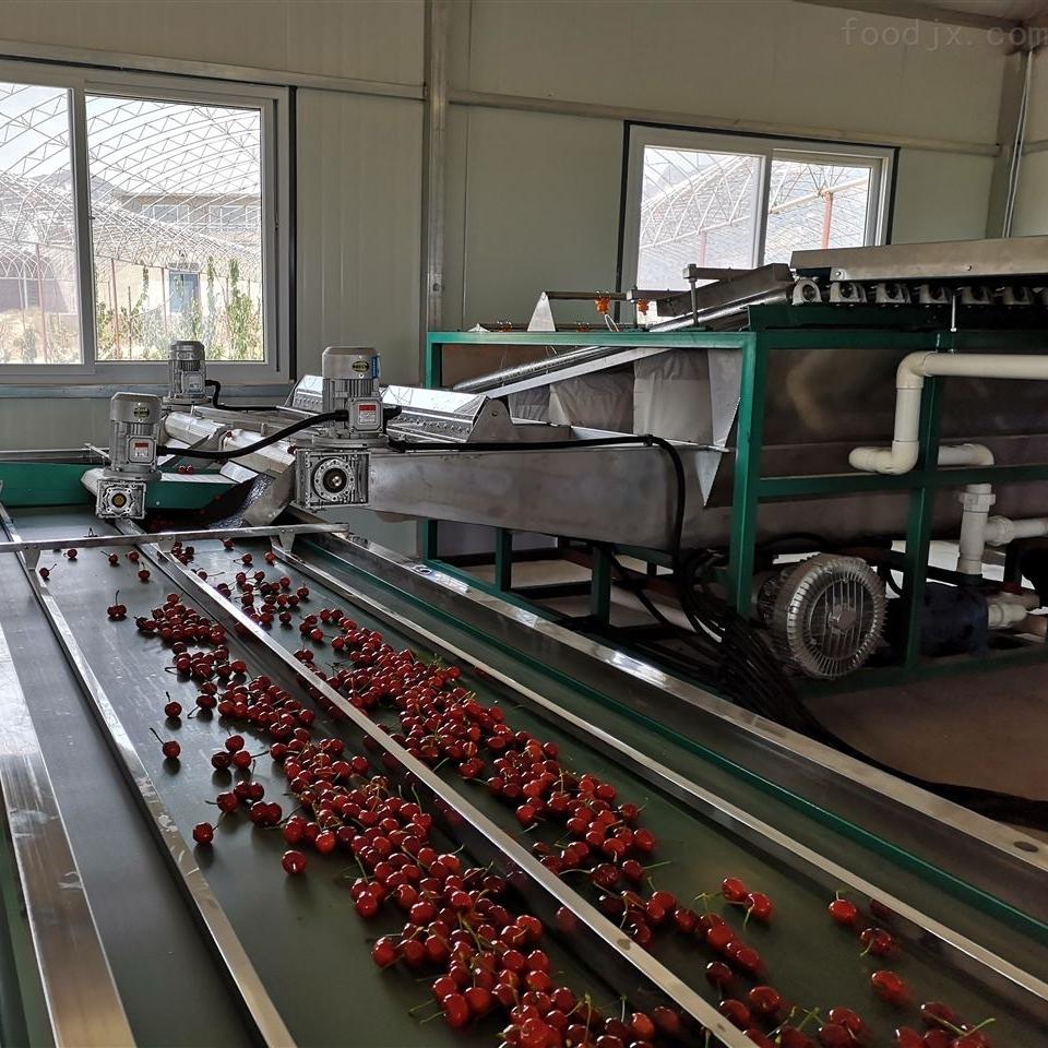 小型樱桃预冷分选机 每小时分选1吨