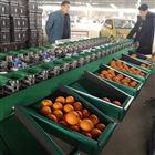 XGJ-SZ-1不知火分选机厂家直销 电商专用柑橘选果机