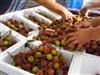 建一个3000平米水果保鲜库需要多少资金?
