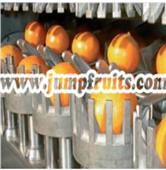 酒饮生产加工设备柑橘果酒生产线