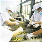 果蔬清洗输送系统 检果输送机