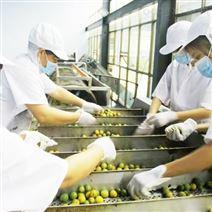 果蔬清洗輸送系統 檢果輸送機