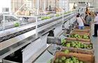 木瓜光电分级系统