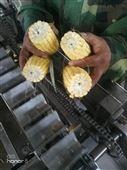玉米切段机鲜玉米修整机速冻玉米前处理设备
