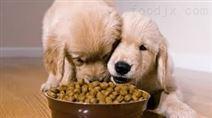 拉布拉多犬 宠物狗粮设备