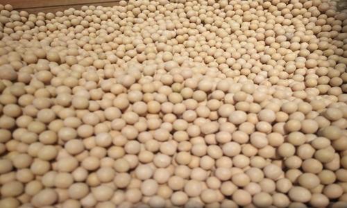 """高温剖析卵白质技能为大豆多肽产物研发""""添助力"""""""