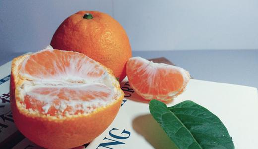 台湾柑橘產業陷困境 選果、冷庫等設備優化品質