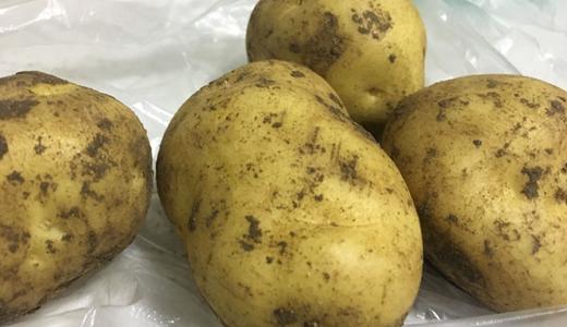 马铃薯蛋白粉标准发布 设备环保性亟待提高