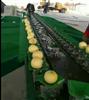 XGJ-SZ西安甜瓜通用分选设备甜瓜选果机