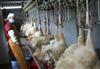 大同鸡鸭鹅屠宰厂污水处理设备
